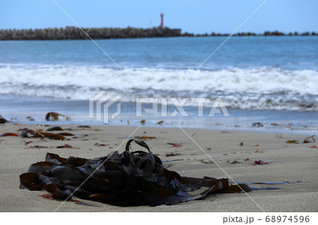 会瀬港 砂浜に打ち上げられたワカメ 68974596