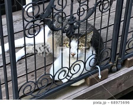 檻の中で横になっている猫 カメラ目線 68975696