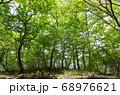 神奈川厚木市の丹沢にある大山 68976621