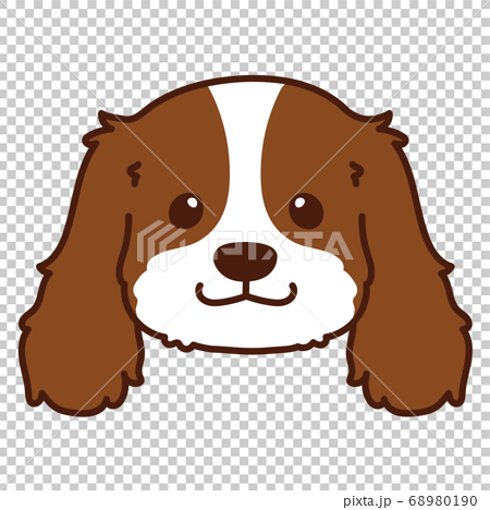 Front view of brown Cavalier King Charles Spaniel with main line 68980190
