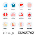 Set of water, weights and human body parts vector illustration in a flat design. 68985702