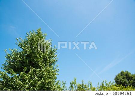 快晴の青空に映える深緑の葉っぱの木 68994261