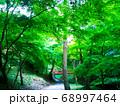 紅葉の観光名所「水沢のもみじ谷」の春 68997464