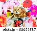 イスに座って見つめるアメリカンショートヘア、花柄背景 68999537