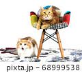 イスに座るアメリカンショートヘアと威嚇するマンチカン2匹の猫、白背景 68999538