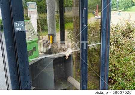 梅雨寒で電話ボックスのなかでお昼寝する野良猫の妊婦さん 69007026