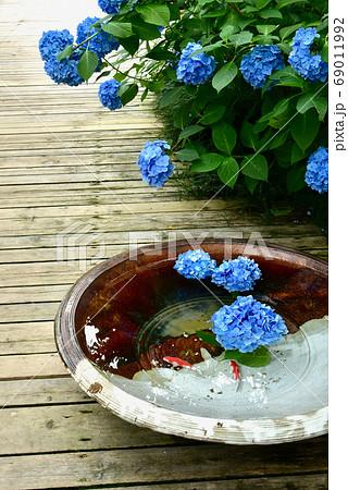 北鎌倉・明月院 花手水のあじさい 69011992