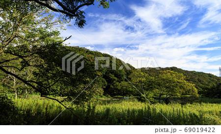 秋の草原関東の秘境小網代の森の晴れ 69019422