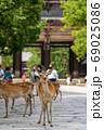 東大寺南大門と鹿 69025086
