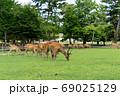 東大寺南大門と鹿 69025129