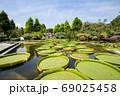 草津水生植物公園 69025458