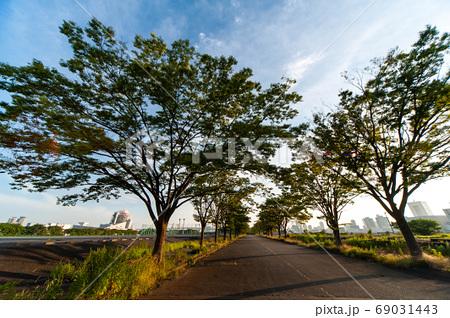 歩道沿いに植えられた風よけの樹木 69031443
