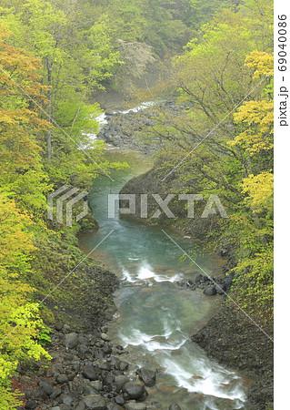 北海道白老町で撮影した春紅葉の白老川 69040086
