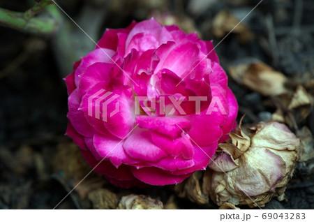 花 フラワー お花 69043283