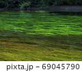 非常に澄んだ水と川底の藻 69045790