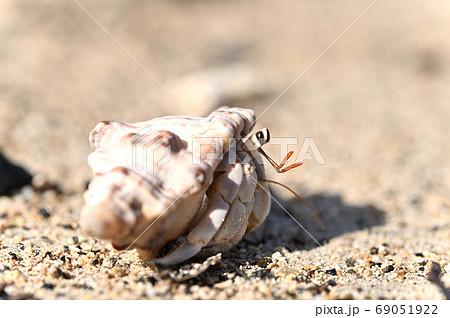 奄美大島の砂浜で生活するオカヤドカリの仲間 69051922
