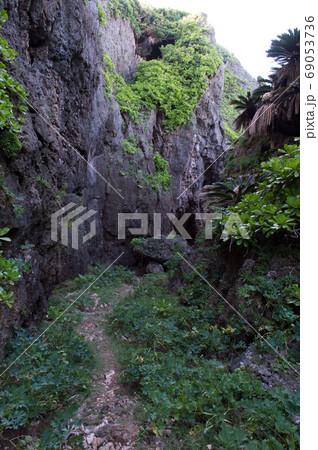南国の緑に囲まれた両側が岩壁の一本道 69053736