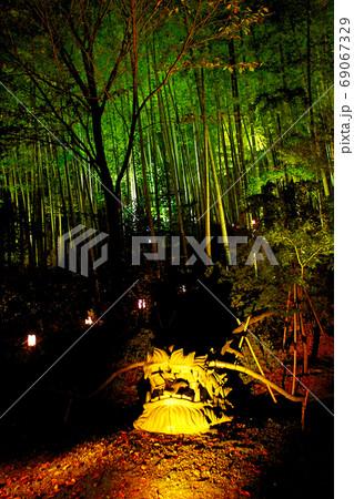 【京都】高台寺の秋の夜間特別拝観 ライトアップされた竹林と庭園の龍 69067329