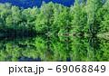 新緑のまいめの池 69068849