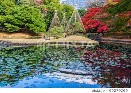 (東京都)小石川後楽園 紅葉と雪吊松 69070260