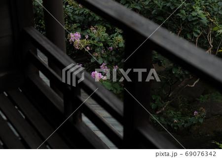 木造家屋の欄干からのぞくサルスベリ 69076342