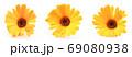 Beautiful Blossoming Yellow Marigold On White Background. Calendula Officinalis 69080938
