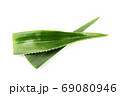 Aloe vera plant isolated on white background 69080946