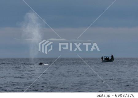 ブローをするシロナガスクジラとボート 69087276