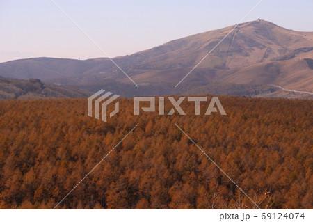 黄金色へ変化した高原のカラマツ樹海 69124074