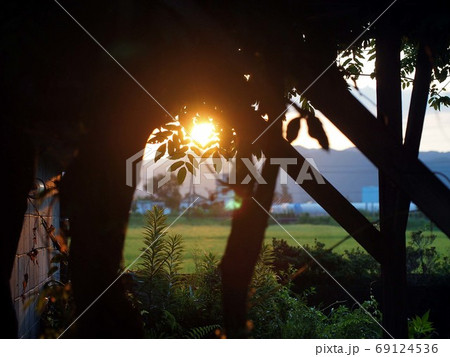 藤棚越しの旭(藤の葉を透かした日の出) 69124536