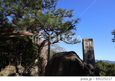 埼玉県秩父市音楽寺の御影の松の木 69125217