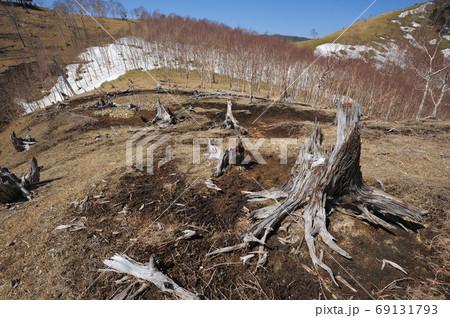 奥日光 社山から黒檜山への中禅寺湖南岸尾根1792m付近の尾根と煙害で枯れた木 69131793