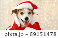 christmas dog as santa 69151478