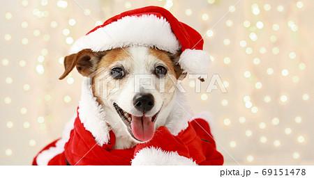 christmas dog as santa 69151478