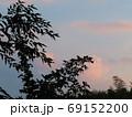 夕方の空と植物たちのシルエット 69152200