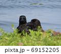 琵琶湖の波と二羽のカラス 69152205