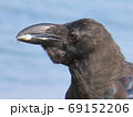 エサを食べるカラスの横顔 69152206