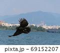 湖と町と山をバックに翼を広げて飛ぶカラス 69152207