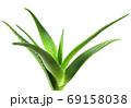 Aloe vera plant isolated on white background. Aloe vera is a succulent plant species of the genus Aloe. It is cultivated for agricultural and medicinal uses 69158038