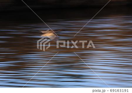 ハイスピードで水面に薄らと姿を残し飛び去る鴨 69163191