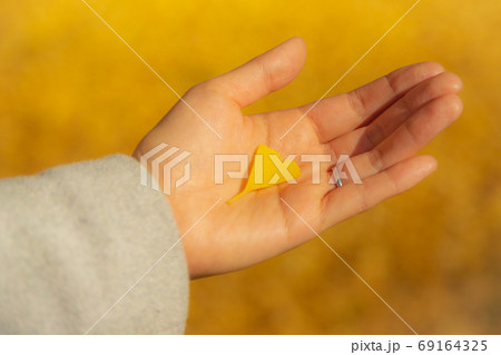 銀杏の葉をもつ女性の手 69164325