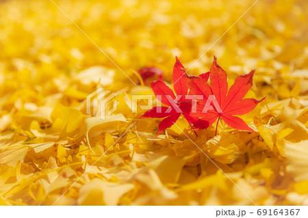 美しい赤色と黄色の落ち葉 69164367
