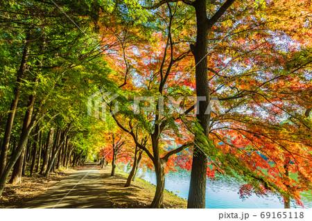 秋の一本道 69165118
