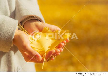 たくさんの銀杏の葉を持つ女性の手 69165299
