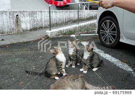 家族みんな参加の猫じゃらし大運動会をする野良猫の子猫達 69175969