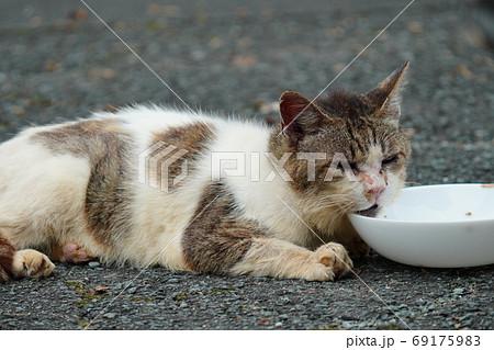 家族みんな参加の猫じゃらし大運動会をする野良猫の子猫達 69175983