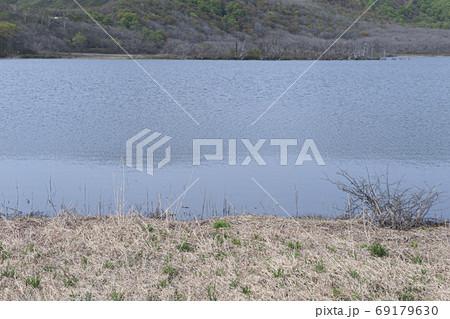 枯草の中に緑が芽吹く早春の雄国沼 69179630