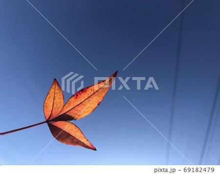 快晴の青空に電線と赤いもみじの葉がある秋の風景 69182479
