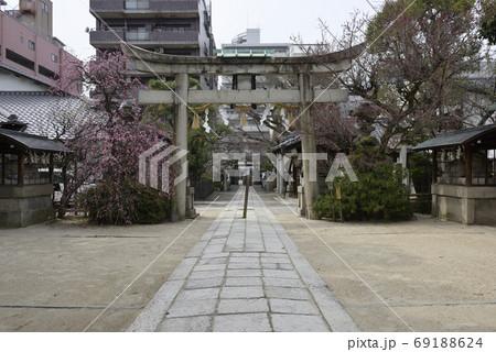 菅大臣神社 八重紅枝垂れ梅と飛梅(白梅) 69188624