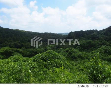 鬱蒼と茂る植物に飲み込まれたような自然の風景 69192656
